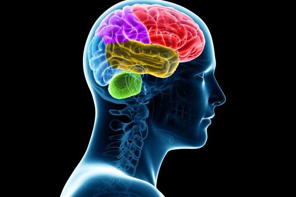 Image of brain inside head